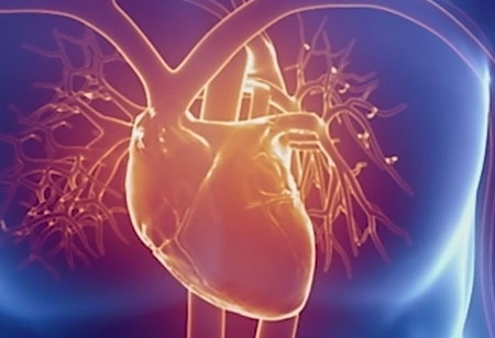 Ways European BioTechs are Fighting Cardiovascular Issues